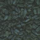 seeds007-tl84